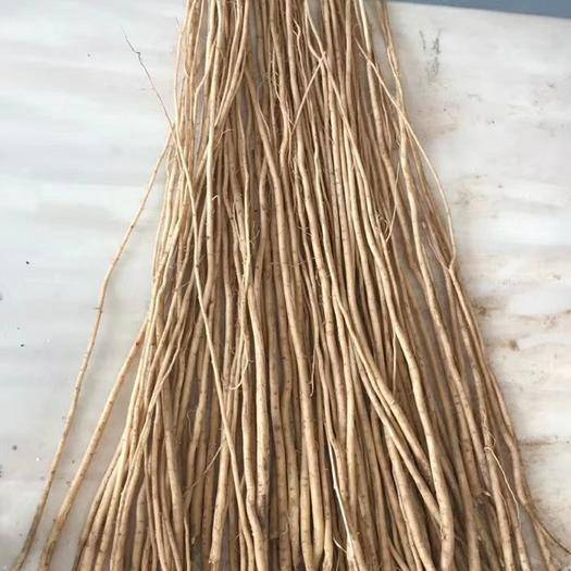 定西渭源县黄芪种苗 甘肃陇西中药材种苗鲜货24h直发