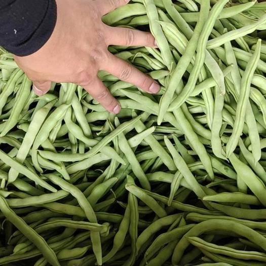 北海合浦縣 精品四季豆 信譽第一 一條龍服務