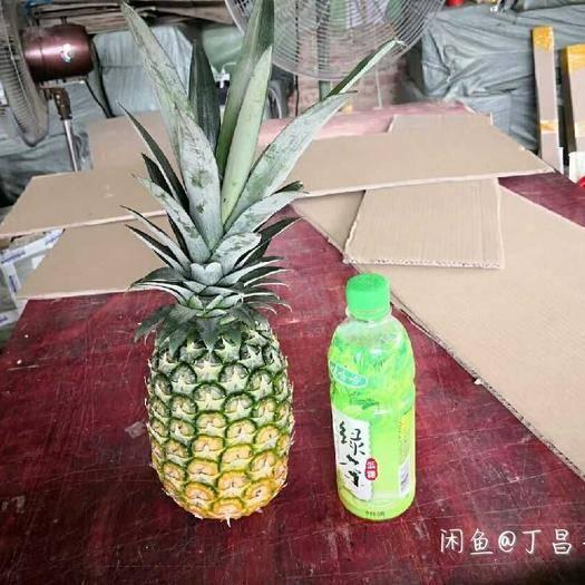 钦州灵山县 菠萝苗凤梨菠萝苗台农菠萝苗当年种植当年结果包邮