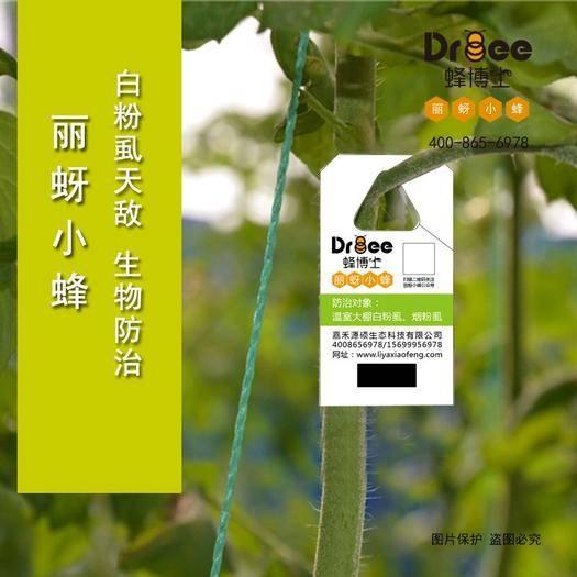 衡水 Dr.bee蜂博士丽蚜小蜂怎么防控害虫 丽蚜小蜂价格