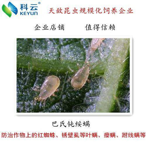 济源市捕食螨 巴氏钝绥螨适用于蔬菜、草莓、果树、茶园、园林、林业等作物