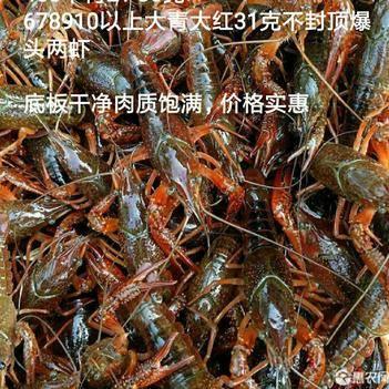 潜江小龙虾大青大红中青中红678910钱以上带炮头两虾包邮