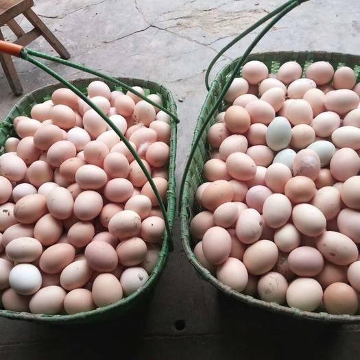 铜陵枞阳县 种蛋散养土鸡蛋