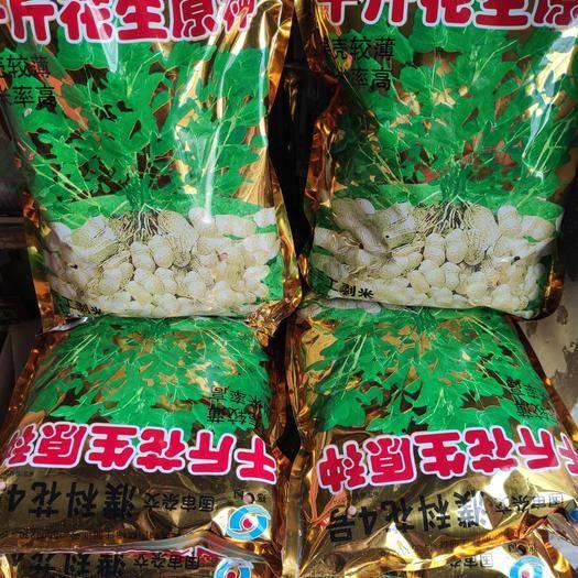 鄭州中原區白沙1016花生種子 濮科花四號(千斤花生原種)純手工薄米 牙率保證 一袋五斤