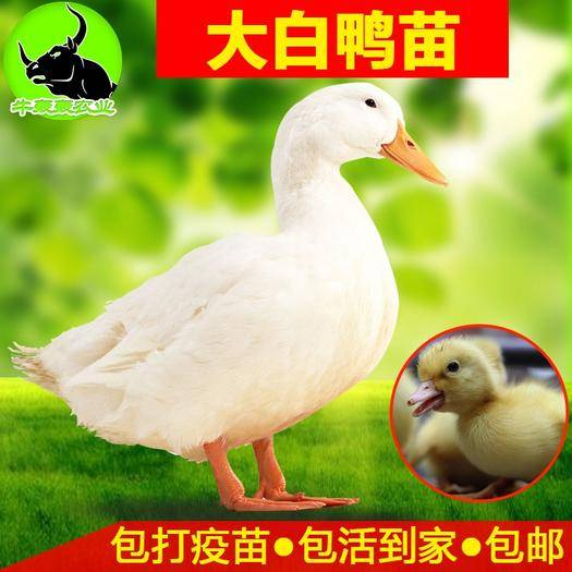 南寧西鄉塘區 櫻桃谷大白鴨