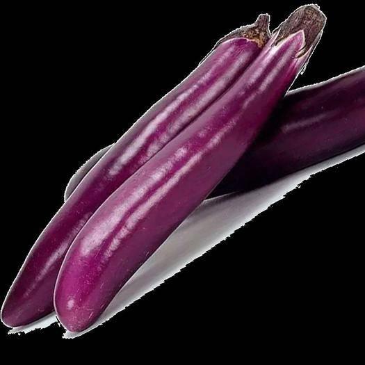 昆明 新鲜长茄子紫茄子农家自种大茄子黑嫩现摘蔬菜