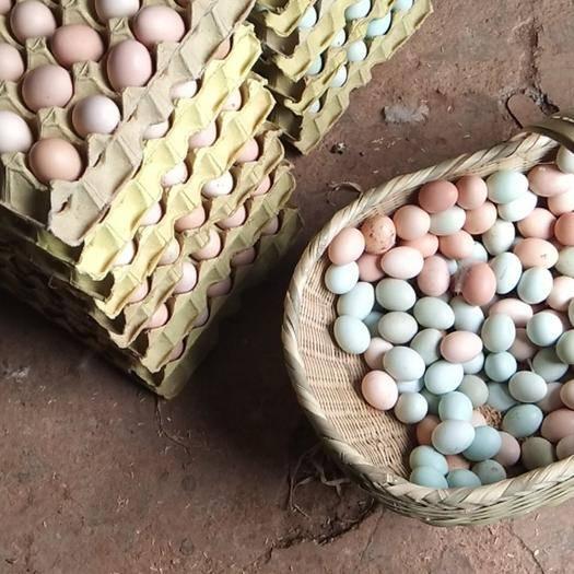 荊門京山市 江漢土雞種蛋受精蛋孵化專用蛋自然受精受精率高支持場地看貨