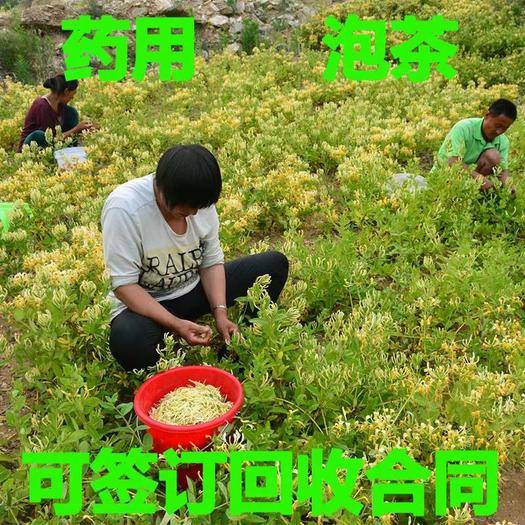 临沂平邑县四季金银花苗 四季金银花树苗,包成活,包开花,质量第一,品种齐全。