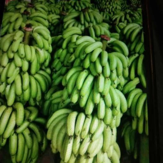 红河元阳县 香蕉基地直供