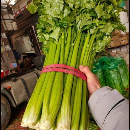 邯郸永年区 本地精品芹菜,大量上市