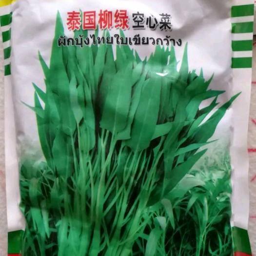 郑州惠济区 泰国柳绿空心菜种子500克