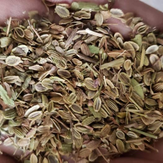 保定安国市普通石竹种子 药材种子批发零售