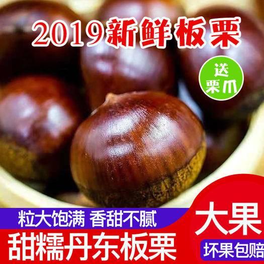 丹東 2020新鮮板栗 丹東板栗 農家板栗 大栗子 新鮮栗子非油栗