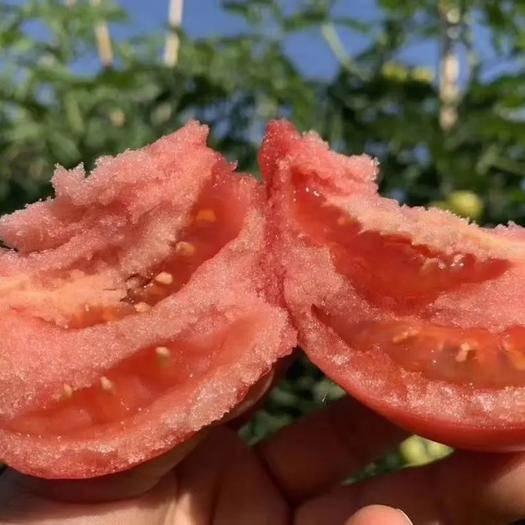 攀枝花米易县 攀枝花普罗旺斯西红柿新鲜自然熟5斤番茄蔬菜生吃大沙瓤
