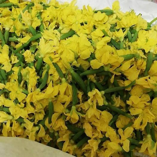 潍坊寿光市黄瓜花 精品青瓜花,需要的联系