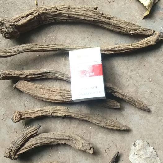 亳州譙城區 香焦品種玄參,改良玄參