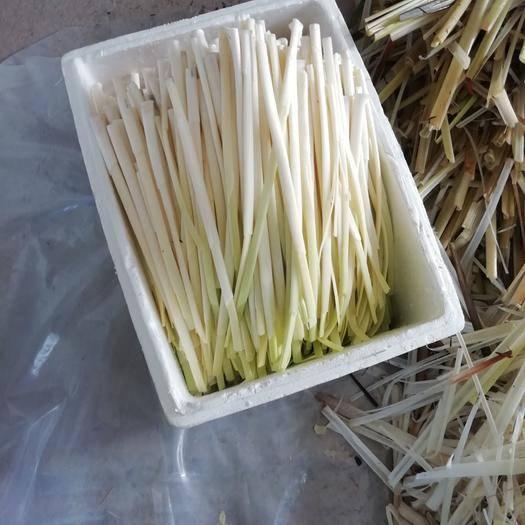 扬州蒲菜 已上市的好菜