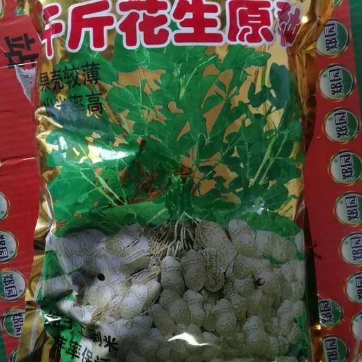 鄭州二七區 千斤花生種子原包裝5斤花生米  高純度 產量高 品質好