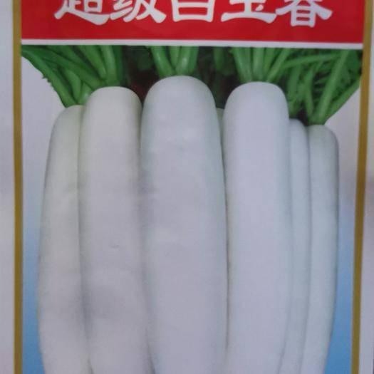 商丘夏邑县 韩国进口超级白玉春萝卜种子 播种后60天可以收获