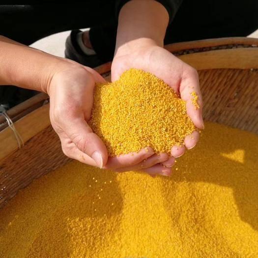 長治沁源縣 特價  2019新黃金苗小米  精品米磚   喂鳥米