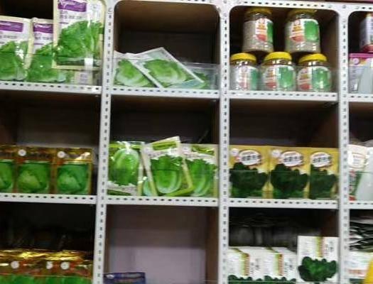 义乌市圆包菜种子 菜种子