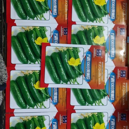 郑州水果黄瓜种子 高档108水果黄瓜   早熟 坐果率高连续结瓜能力强产量高