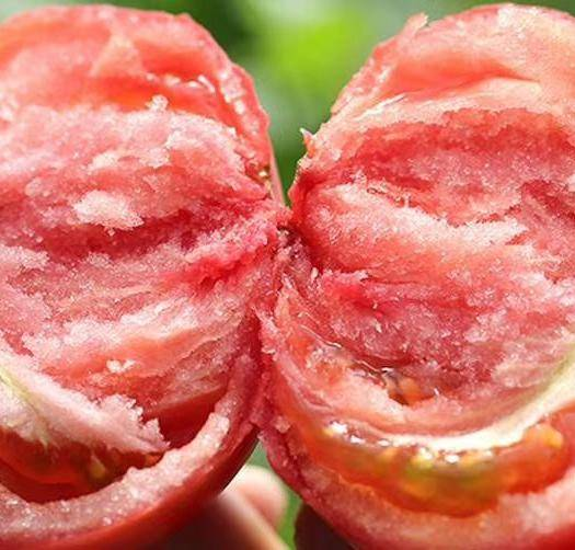 米易縣 攀枝花露天西紅柿 沙瓢西紅柿 專業供應鏈 支持一件代發