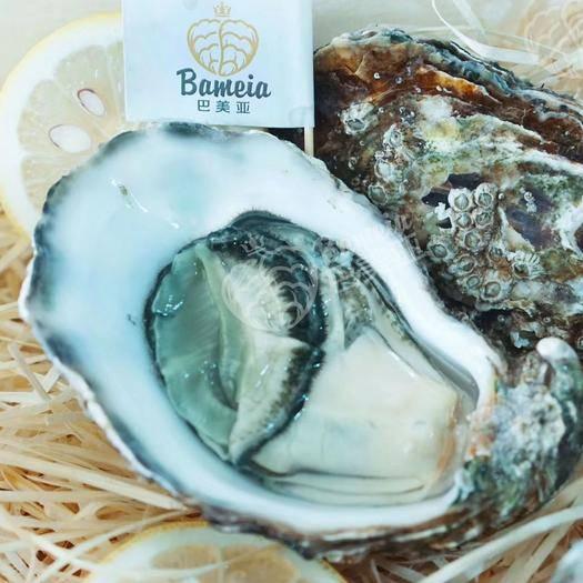 厦门湖里区法国生蚝 法国进口,绿翡翠生蚝N1号,品质保证,有进口报关相关资料