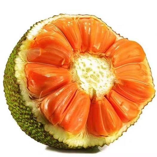 钦州灵山县 海南5号红肉菠萝蜜苗