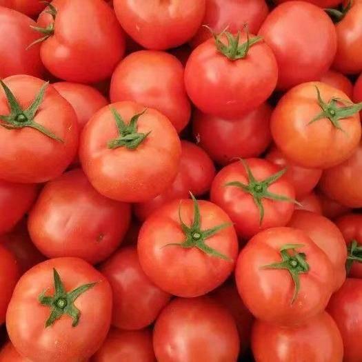 鹽邊縣大紅西紅柿 米易大紅 石頭番茄 專業團隊 多年代辦經驗
