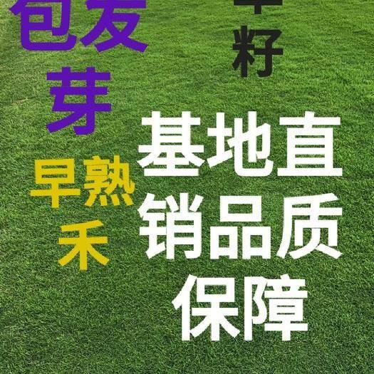 北京房山护坡草种子 基地直销草籽包发芽早熟禾高羊茅护坡草坪四季常青草坪草种
