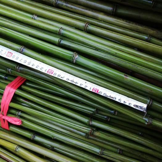 耒阳市 大量金竹