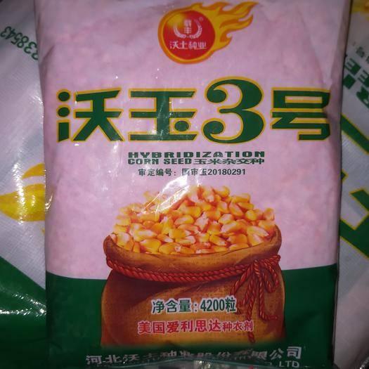 商丘夏邑縣沃玉3號玉米種子 沃玉3號,優質高產,綜合抗性好