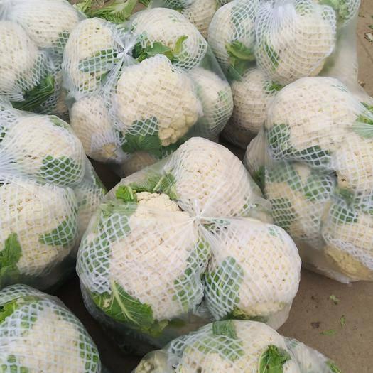 南陽新野縣 新野有機花菜大量上市,貨源充足價格美麗!歡迎進行騷擾