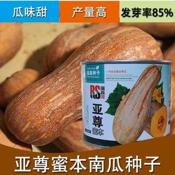 一代杂交亚尊早栗蜜本南瓜种子食用香甜早熟高产南瓜种子50克