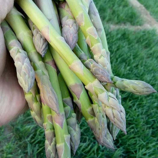 深澤縣 百畝綠蘆筍尋找長期合作伙伴,四月中旬就可以上市了,歡迎考察
