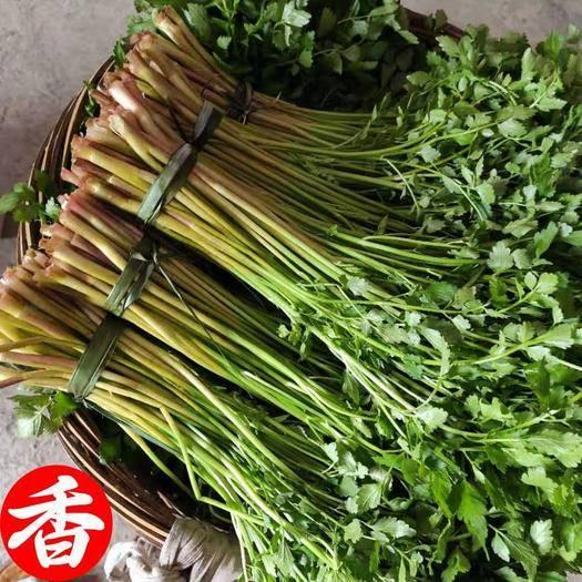 上饶上饶县 正宗水芹菜,香味独特,可以较强的降血压