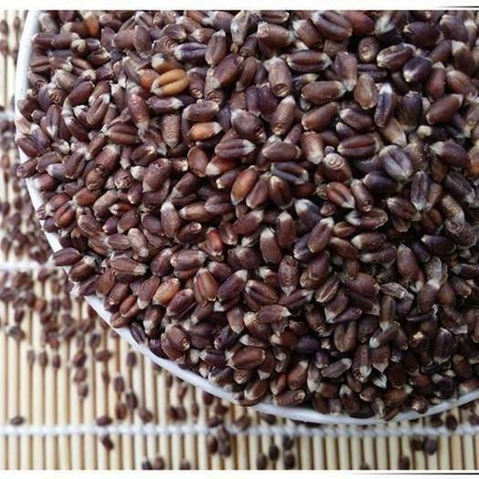 鄭州中原區 19年農家 黑麥 黑小麥 黑麥米 包郵