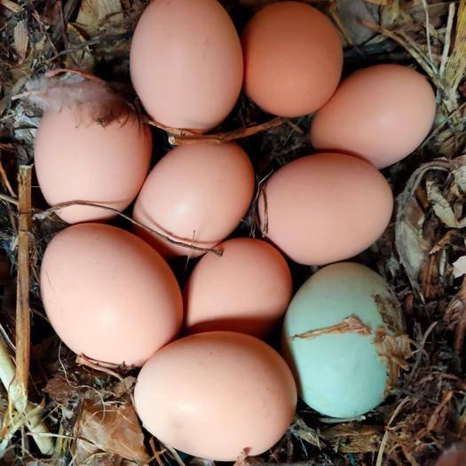 棗莊山亭區 [零批]50枚包郵農家土雞蛋 雞蛋 笨雞蛋