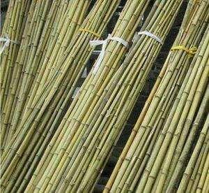 阳江 我有各种各样竹杆,竹子