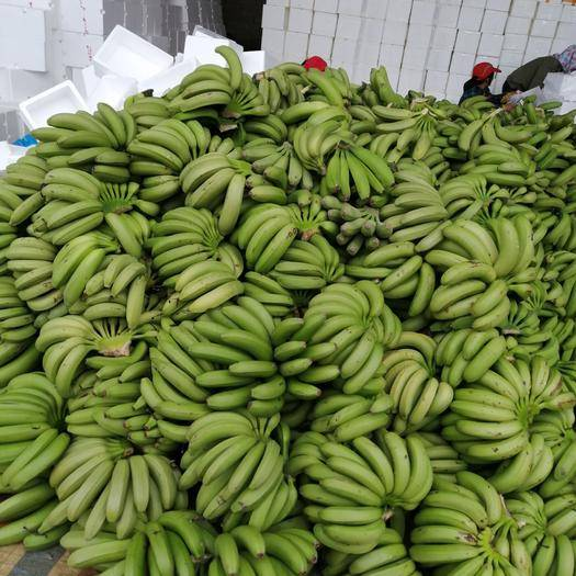 南宁西乡塘区威廉斯香蕉 七成熟