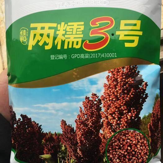 長沙芙蓉區紅高粱種 兩糯3號,高端白酒首選原料,產量高,生長期短,抗性強