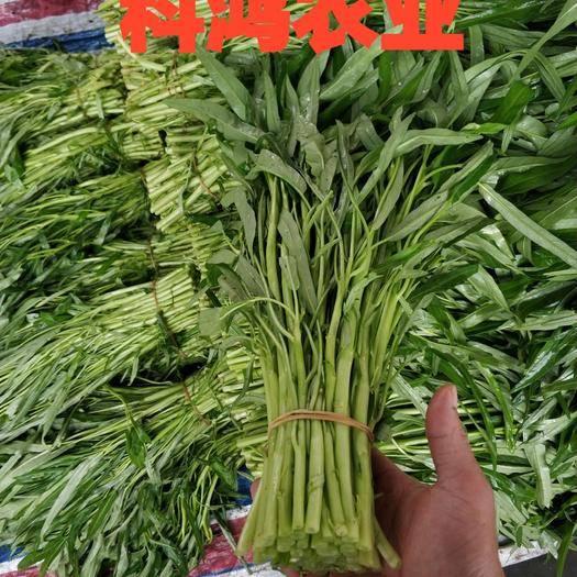 茂名茂南区 精品 青白骨空心菜