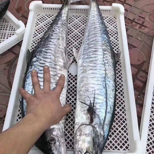 漳州東山縣 魚類海鮮,深海大馬鮫魚片,稱重,包郵