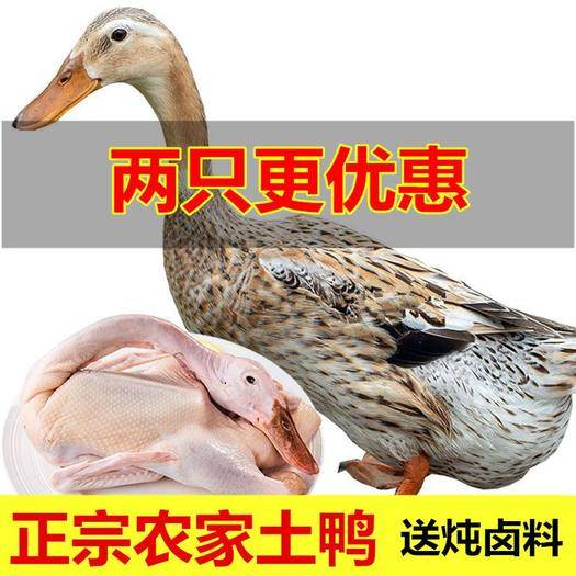 池州東至縣 (兩只更優惠)正宗散養土鴨 鴨子整鴨 鴨肉笨鴨水鴨跑步鴨
