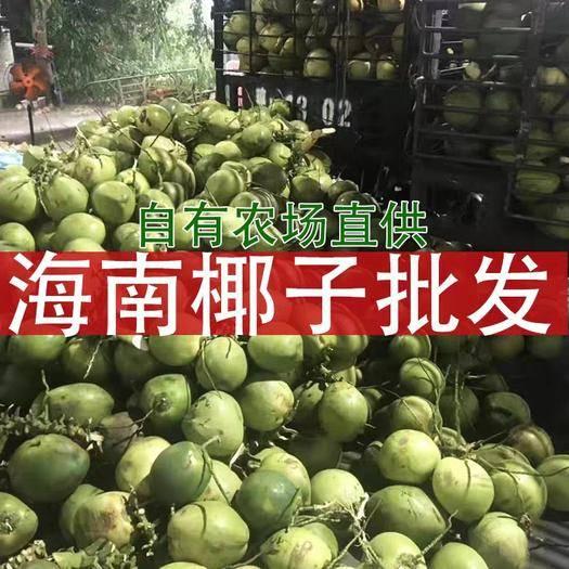 文昌市 海南文昌椰子带皮青椰 周径52以上优选大果 一年四季供应市
