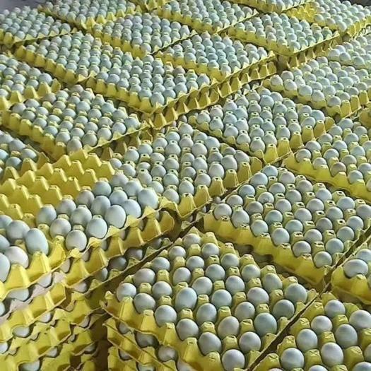 長沙長沙縣土雞蛋 綠殼蛋,新鮮口感好,質量保證