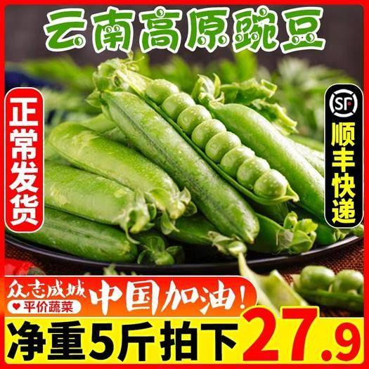 昆明 云南新鮮豌豆8斤當季農家蔬菜帶殼豌豆莢水果青豆荷蘭甜豆角