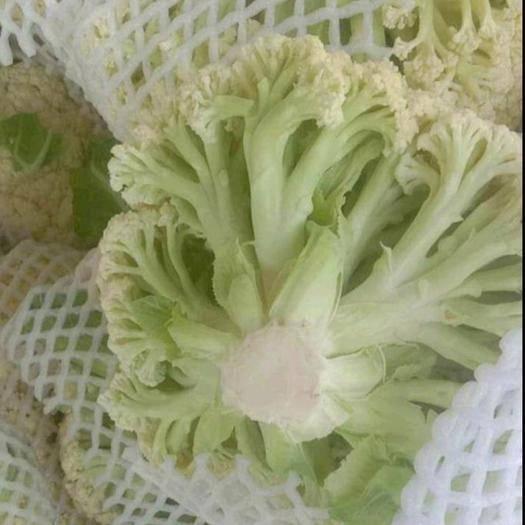 商丘有机花菜 商丘有机松花菜上市了,价格优惠,服务周到