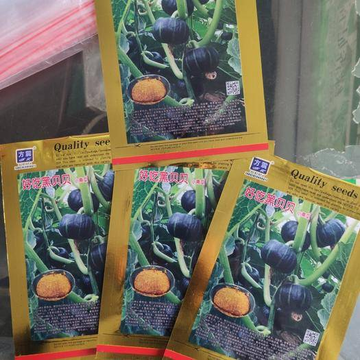 夏邑县 好吃迷你黑贝贝南瓜种子(日本进口品种) 高产量 糖度高口感